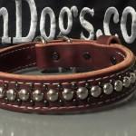 1 inch latigo Leather 2ply stainless spots black spots