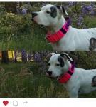 Cute Dog Collar Handle.jpg