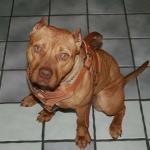 Cute Dog Harness.jpg