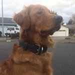 Cute Dog Leather Collar.jpg