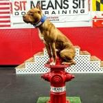 Cute Dog USA2.jpg