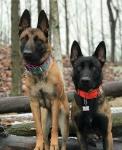 Cute Dogs.jpg