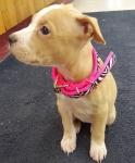 Cute Puppy Collar.jpg