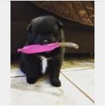 Cute Puppy Tug.jpg